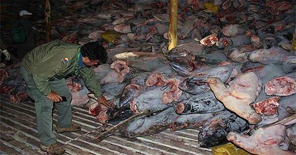 """Đội tàu cá Trung Quốc """"vét sạch mọi thứ"""" gần quần đảo Galaparos"""