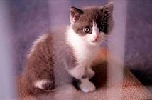 Video: Chi 35.000 USD để nhân bản chú mèo đã chết 7 tháng trước ở TQ
