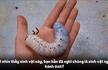 """Video: Xem loài bọ như """"sinh vật ngoài hành"""" tinh lột xác"""