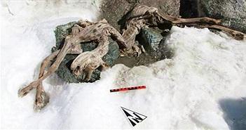 Phát hiện xác ướp sơn dương đóng băng 400 năm trên núi