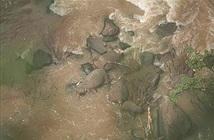 Đàn voi hoang dã chết đuối sau khi rơi xuống thác nước