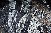 Phát hiện hóa thạch san hô khoảng 300 triệu năm ở Sơn Đoòng