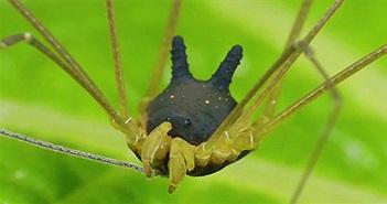 Sự thật về con nhện mọc sừng dễ thương nhất quả đất!