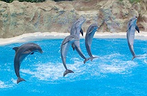 Những vũ công của đại dương