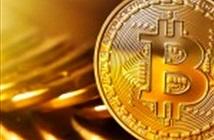 Tăng hơn 40% trong 1 tuần, giá Bitcoin lên đến 14.561 USD