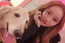 Chó chết vì ung thư, gái xinh bạo chi để nhân bản ra con khác