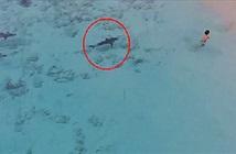Rợn người cá mập lặng lẽ áp sát bé trai đang tắm biển