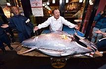 Con cá khủng, mổ ra đem bán được hơn 41 tỷ đồng
