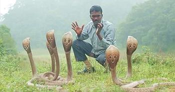 Người đàn ông bị rắn cắn gần 4.000 lần, chuyên tay không bắt rắn khổng lồ