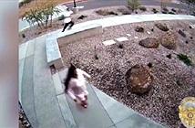 Chuyện lạ: Cuống cuồng chạy trốn cảnh sát, trèo luôn vào đồn