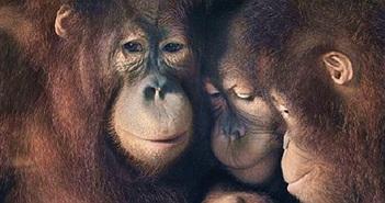 Động vật có cảm xúc giống như con người không?