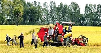 Bài toán lúa gạo của Việt Nam: Bốn giải pháp dài hạn