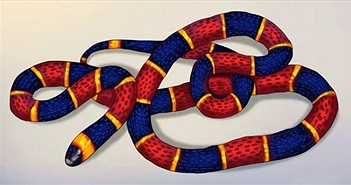 5 mẹo dân gian khiến rắn sẽ không dám bén mảng tới gần nhà bạn