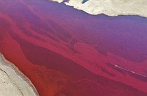 Sự thật đau lòng đằng sau hình ảnh dòng sông Bắc Cực nhuộm đỏ như máu