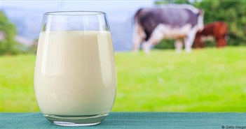 Tác dụng của sữa và những thời điểm tốt nhất nên uống sữa
