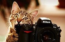Hài hước khi động vật nghịch máy ảnh