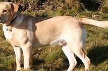 Nghiên cứu mới bác bỏ cách đổi tuổi chó sang tuổi người bằng cách nhân cho 7