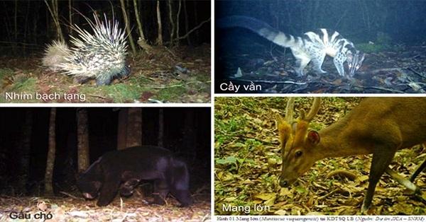 Phát hiện nhiều loài thú quý hiếm ở Vườn quốc gia Bidoup-Núi Bà