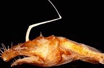 Phát hiện thêm một loài quái vật đại dương mới