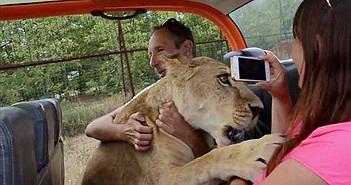 Sư tử cái nhảy xe du khách và ôm hôn gây bất ngờ