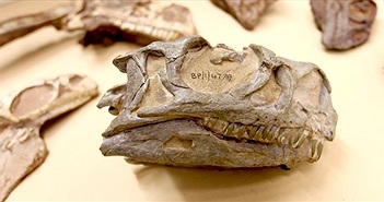 Phát hiện loài khủng long mới tại Nam Phi từ hóa thạch 200 triệu năm