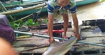 Xôn xao ngư dân miền Tây thả câu trúng loài cá lạ
