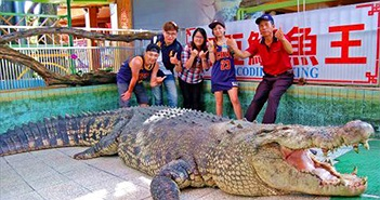 Cá sấu lớn nhất ở châu Á bị khách TQ ném chảy máu