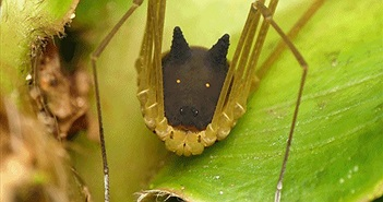 Tìm thấy sinh vật kỳ quái thân nhện, đầu chó cực dị
