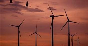 Ảnh hưởng của điện gió đối với môi trường bị xem nhẹ