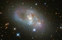 Phát hiện sửng sốt về thiên hà xoắn ốc lùn IC 4653