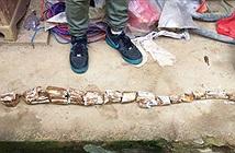 TQ: Đổ móng nhà, phát hiện vật quý hiếm vạn năm tuổi