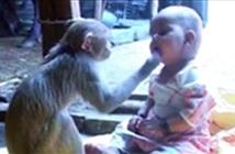 Khỉ làm bạn với trẻ nhỏ