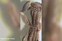 Ấn tượng cảnh nhện khổng lồ chui ra khỏi xác cũ