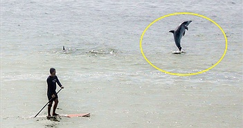 Lạ độc: Nhìn thấy người, cá heo phải nhảy lên chào mới chịu