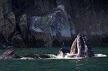 Ngoạn mục cảnh cá voi phun cầu vồng