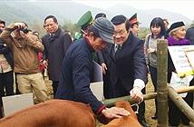 Chủ tịch nước trao 13.000 tấn xi măng cho hộ nghèo các xã biên giới Việt- Trung