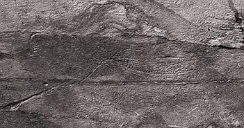 """Choáng váng đàn quái vật 570 triệu tuổi không nội tạng, """"nối mạng"""" bằng tơ"""