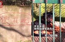 Con sói lạ trong sở thú ở Trung Quốc