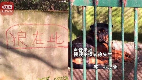 """Con """"sói lạ"""" trong sở thú ở Trung Quốc"""