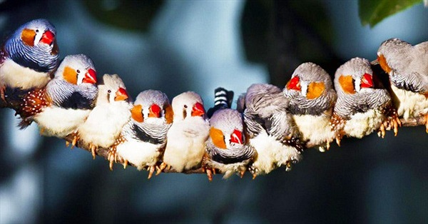 Các nhà khoa học đã biết được làm thế nào loài chim nhìn thấy từ trường Trái đất