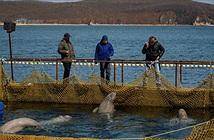Rợn người cảnh tượng nhà tù cá voi beluga