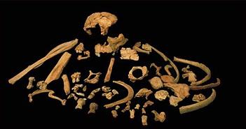Chủng người ăn thịt đồng loại cách đây gần triệu năm