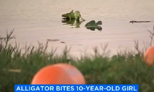 Kinh hoàng cá sấu tấn công cô bé 10 tuổi