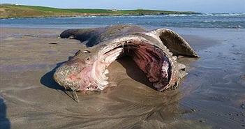 Xác cá mập dài hơn 7 mét trên bờ biển làm dấy lên nhiều nghi vấn