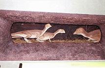 Phát hiện loài khủng long sống dưới lòng đất 100 triệu năm trước