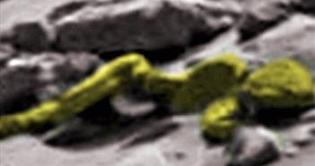 Tìm thấy xương người ngoài hành tinh trên sao Hỏa?