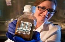 Hiến tặng và cấy ghép chất thải người trong y học - tưởng đùa mà hóa thật 100%
