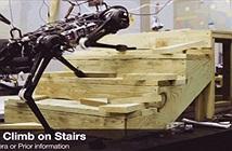 Robot mù của MIT có thể chạy, leo trèo cầu thang thành thạo