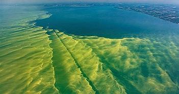 Biến đổi khí hậu: Hồ núi tại Mỹ chuyển màu do tảo diệp lục xâm lấn