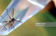 Cả đất nước Iceland chỉ có duy nhất 1 con muỗi, nó còn bị ngâm rượu và đưa vào viện bảo tàng